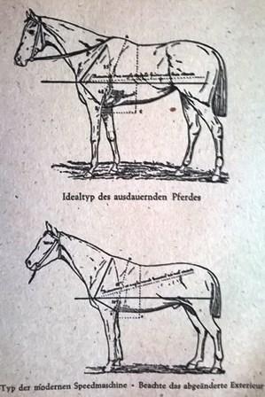 Abbildung Steher vs Sprinter