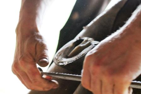 Verstellungen und Hufpflege beim Fohlen