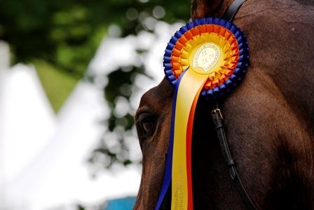 Erfolg zu Pferd – Zuhause haben alle S-Pferde!