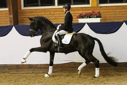 Modetrends in der Pferdezucht