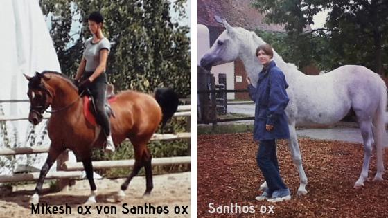 Mikesh ox und Santhos ox