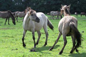 Dominanz Horsemanship
