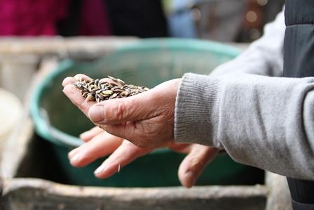 Futtermittelkunde: Hafer, Gerste & Mais