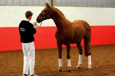 Wann kann man einem Pferd Härte zusprechen?