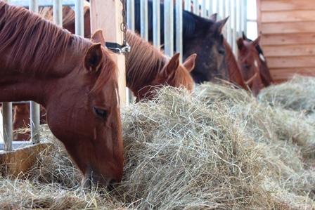 Raufutter in der Pferdefütterung