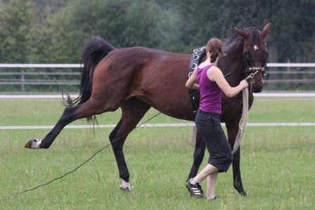 5 Zeichen dafür, dass Dein Pferd Dir zu viel wird