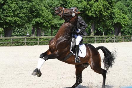 Wettrüsten zu Pferd – Die reiterliche Angst vor Kontrollverlust