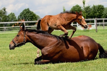 Kein Pferd springt freiwillig! Oder doch?