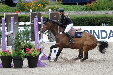 Wie kann ich mein Pferd zum Springen bewegen?