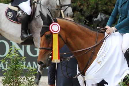 Von verhinderten Siegern und großen Sportpferden