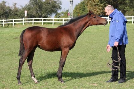 Was macht einen richtigen Pferdemenschen aus?