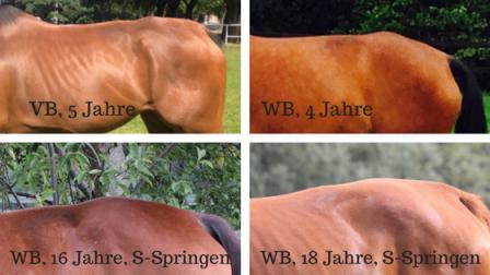 Hunter's Bump – Rückenleiden bei Springpferden