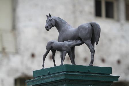 Der Wert des Stutenstamms für ein Sportpferd