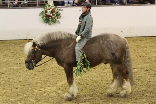 Pferdebeurteilung – Darf es ein bisschen mehr (Pferd) sein?