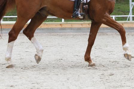 Haltbarkeit – Die Warnsignale des Pferdes für Überlastung im Sport