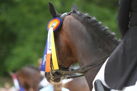 Die wichtigsten Portale für Pferdesportdaten